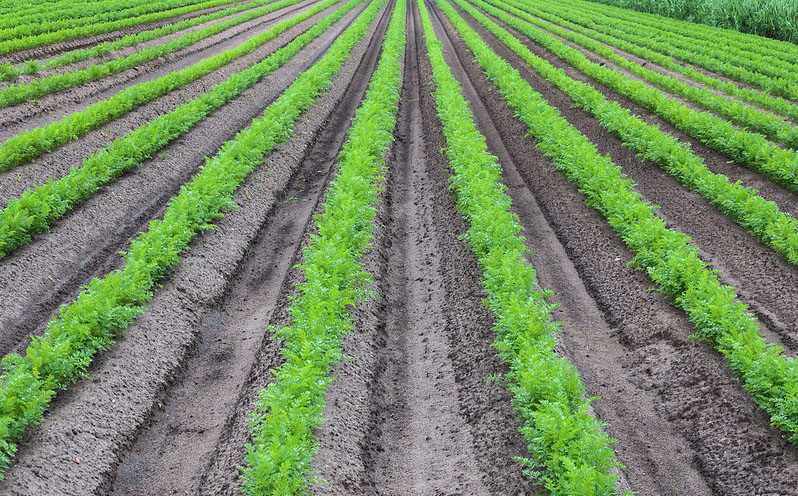 Organic vs. Conventional Farming