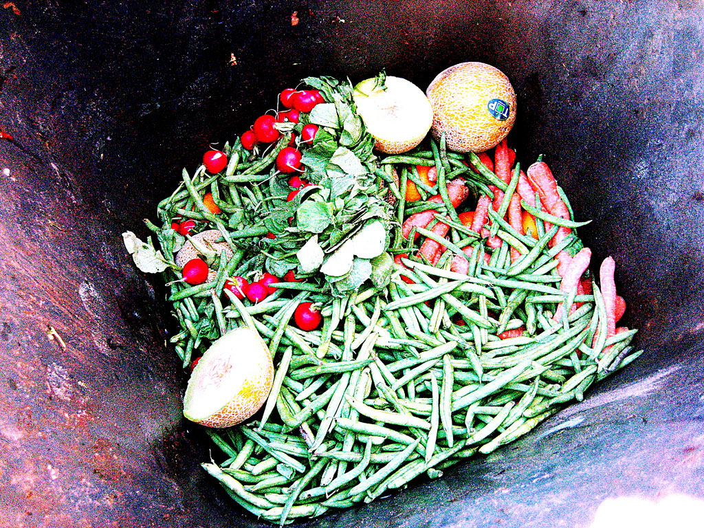Tackling the Food Waste Crisis