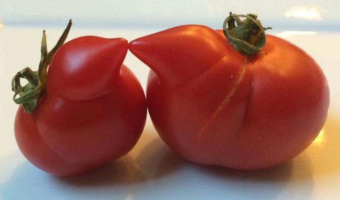 Tomatos from @UglyFruitAndVeg