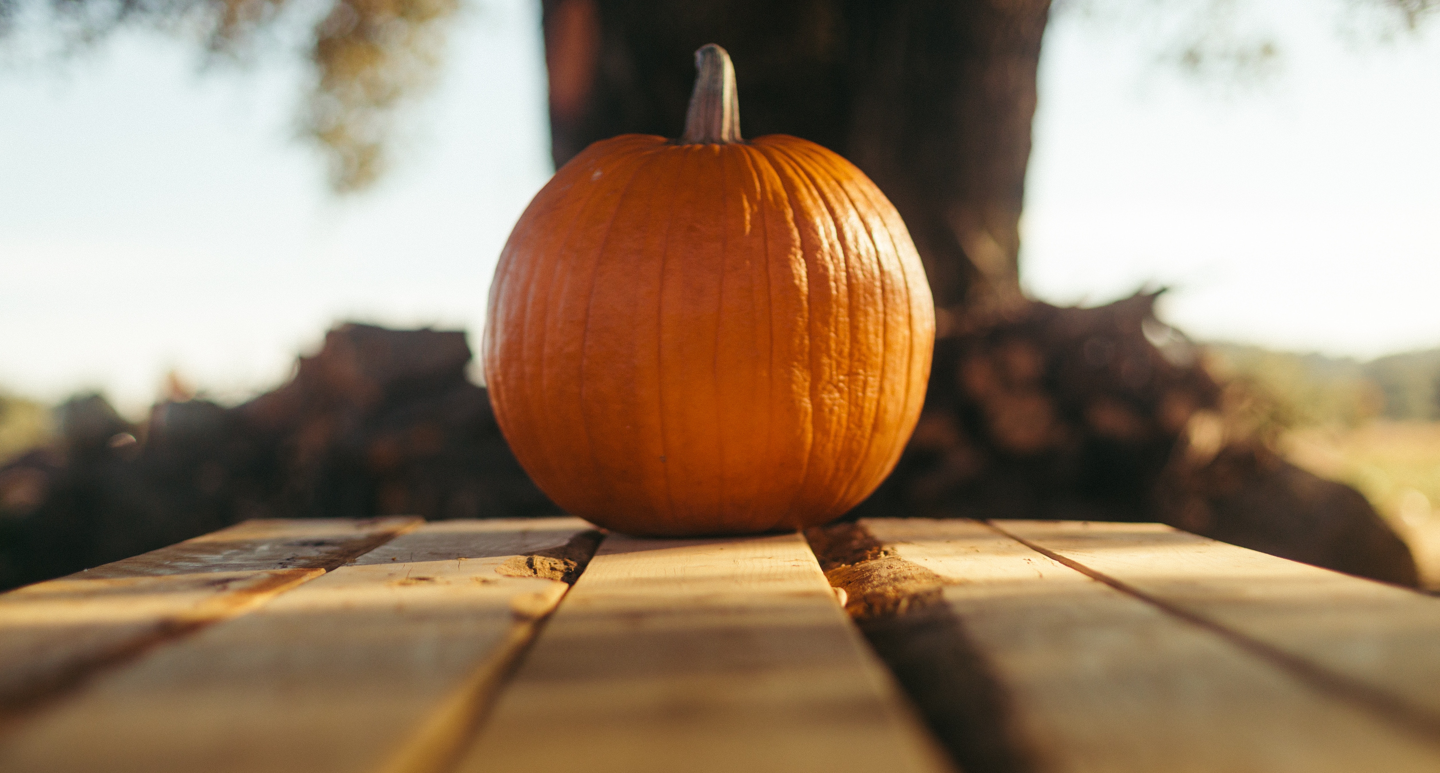 Skin to Seed: How to Eat an Entire Pumpkin