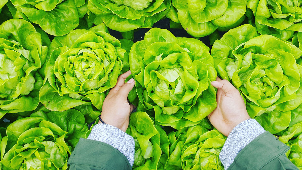 How to Waste Less Lettuce