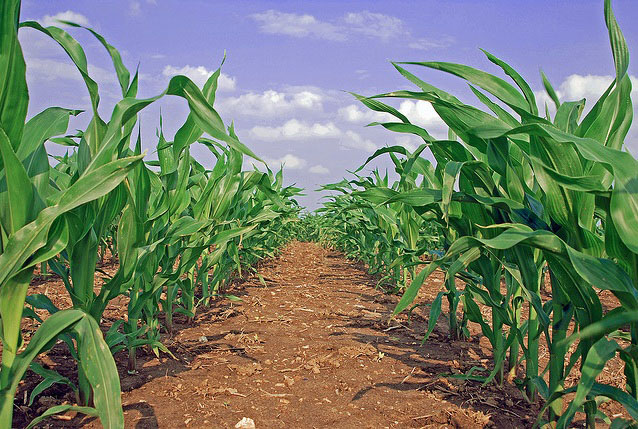 Corn Belt farmland prices soar