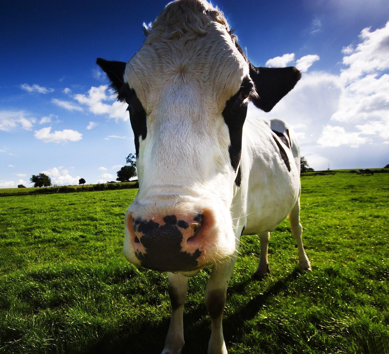 On Small Farms, Agritourism Grows