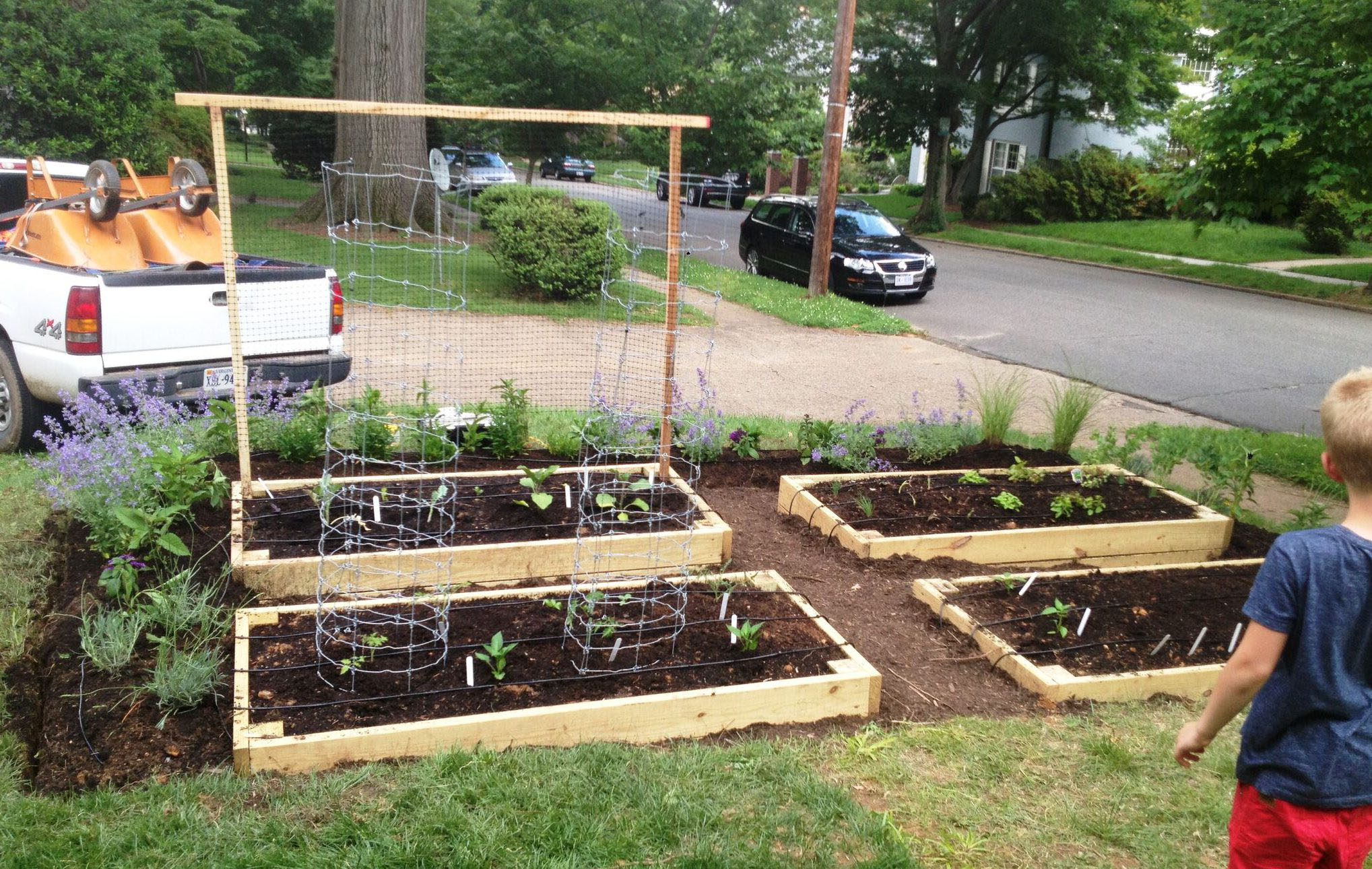 Front yard vegetable garden with herb border