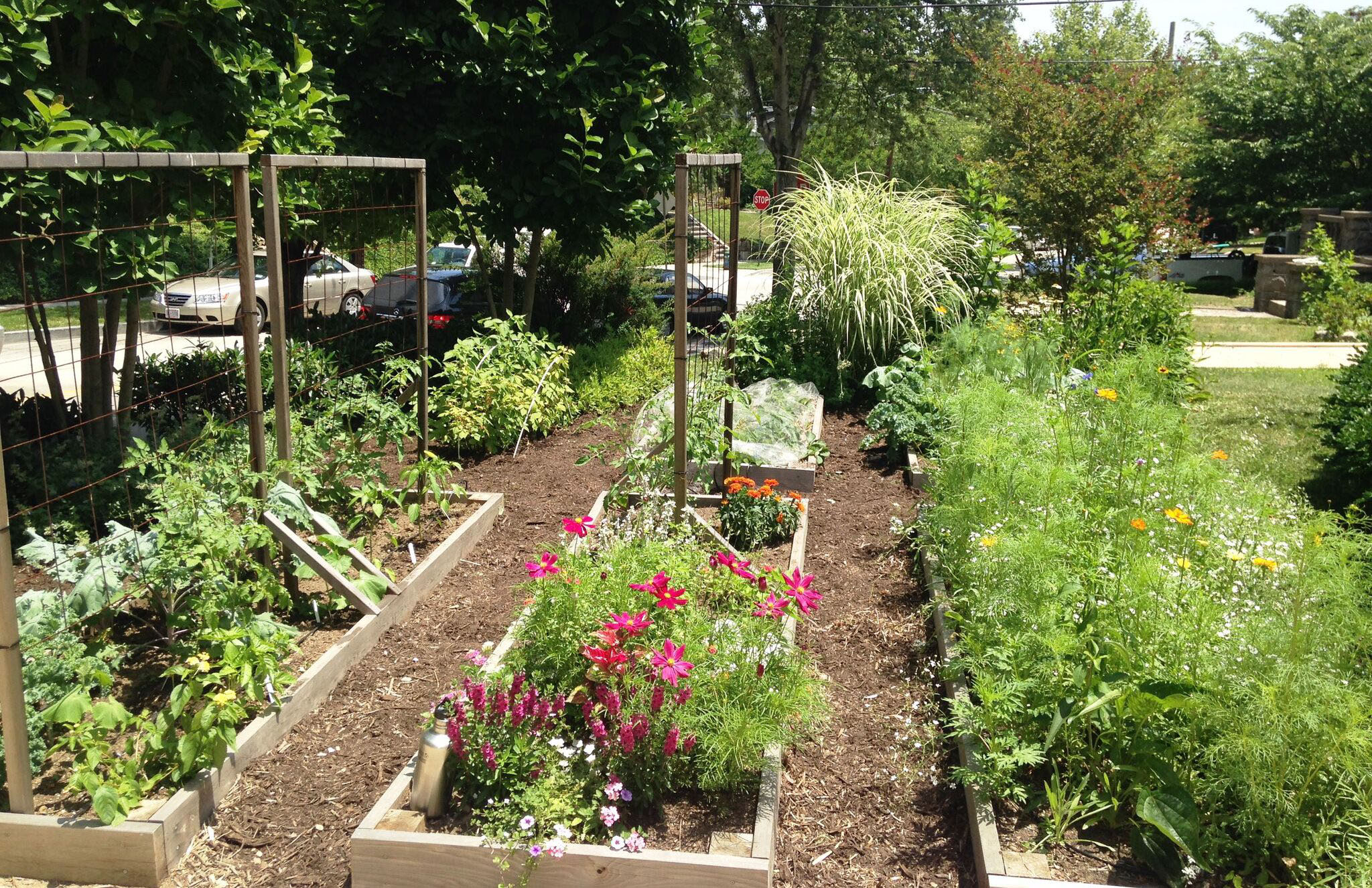 Why You Should Plant A Front Yard Veggie Garden