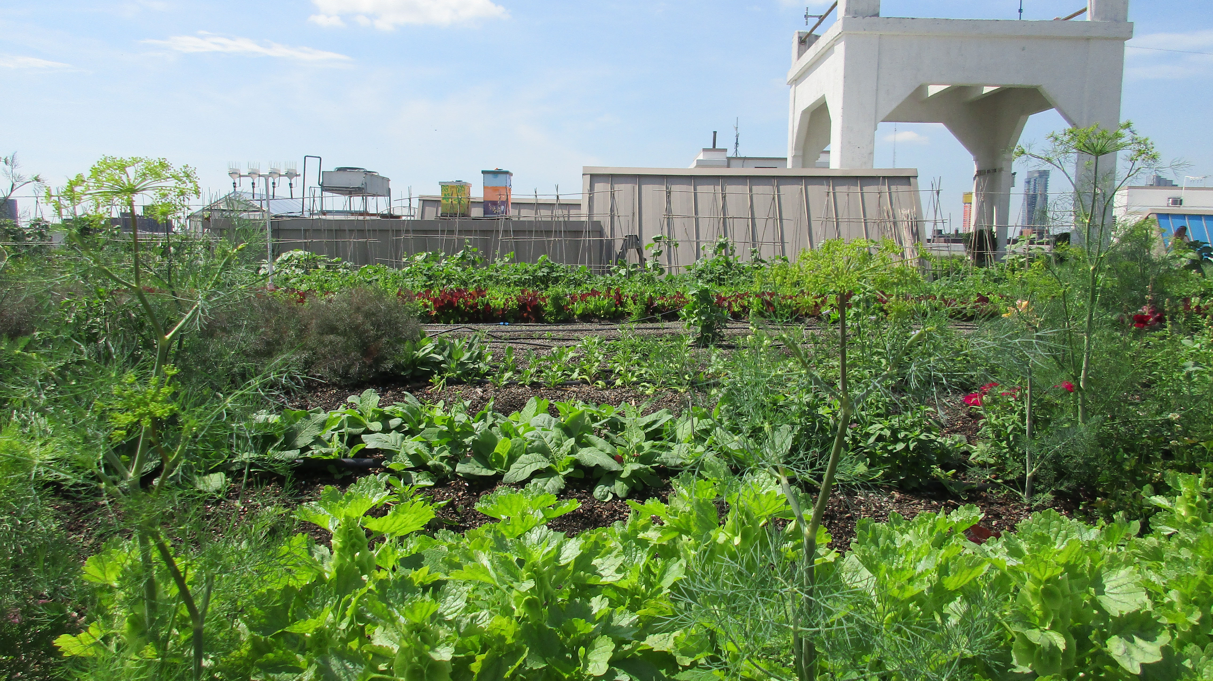 The view at Brooklyn Grange urban farm