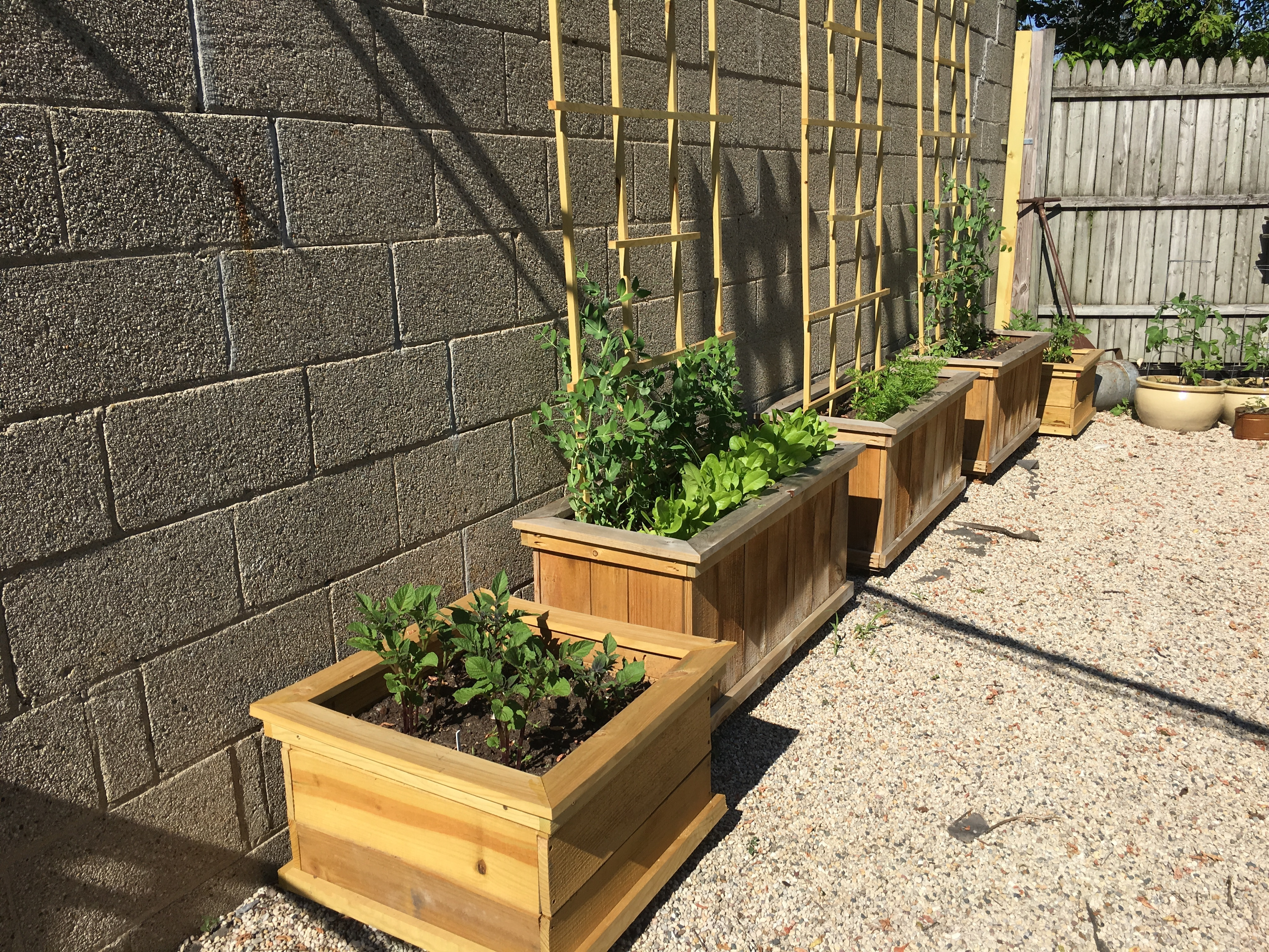 Beginner Tips for Efficient and Less Wasteful Vegetable Gardening