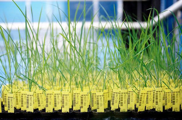 GMOs that prevent cancer