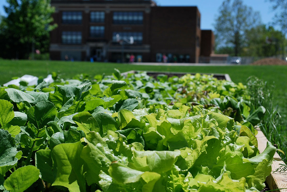 Farm-to-School: 4 Things I Learned Buying Local Food for a School District