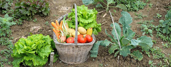 Grow extra vegetables to donate to food pantries