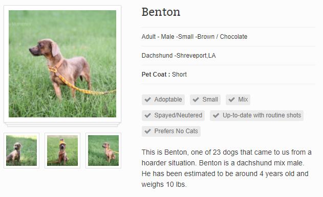 Pet Details