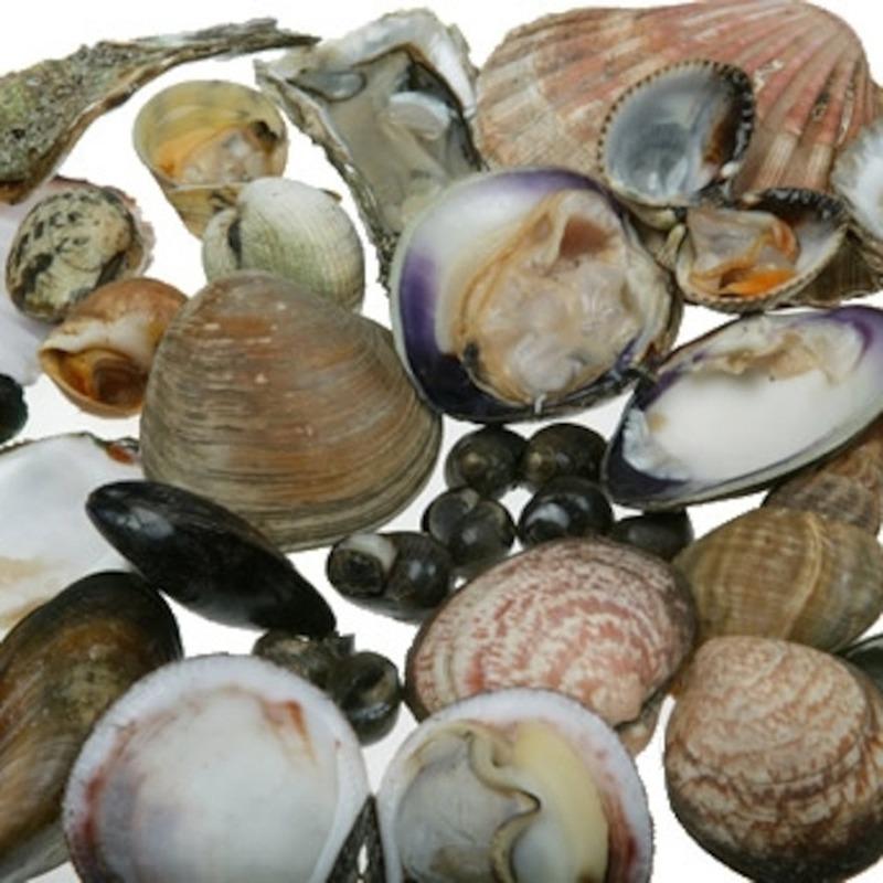 Toxic shellfish warning should be taken seriously