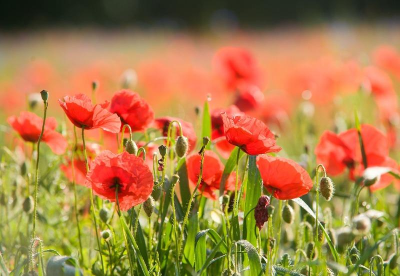 April 12 - Poppy Day volunteers needed