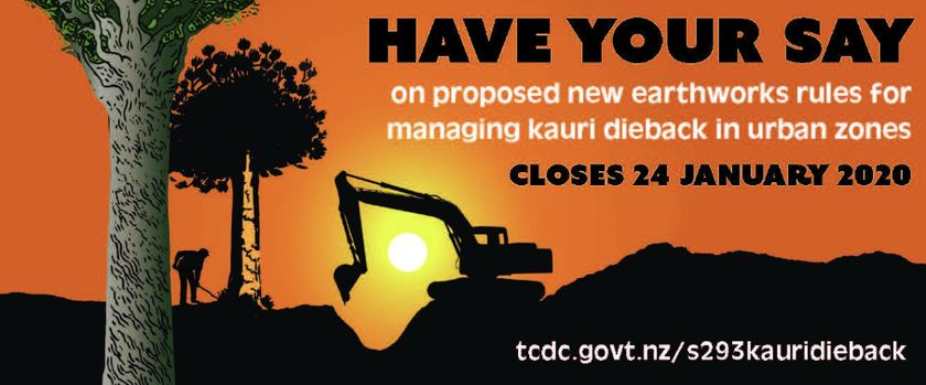 Got a kauri in your garden? You may need a resource consent - TCDCThames