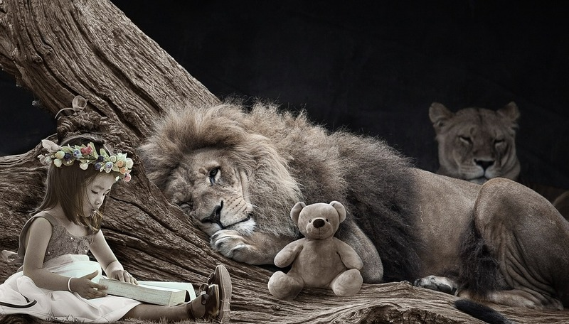 Lions Book Fair a roaring success