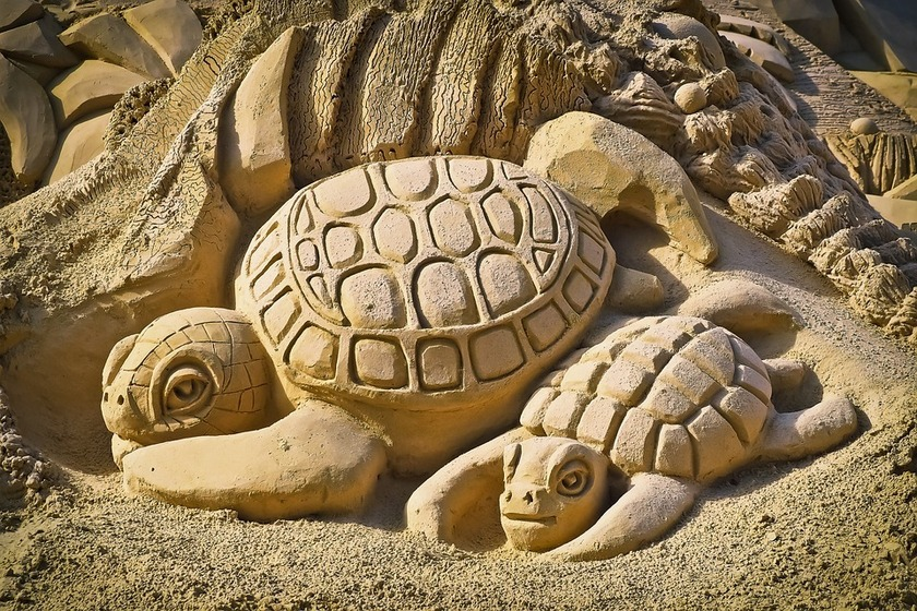 Sand sculptures, rat traps, conservation education and more at Envirohub event