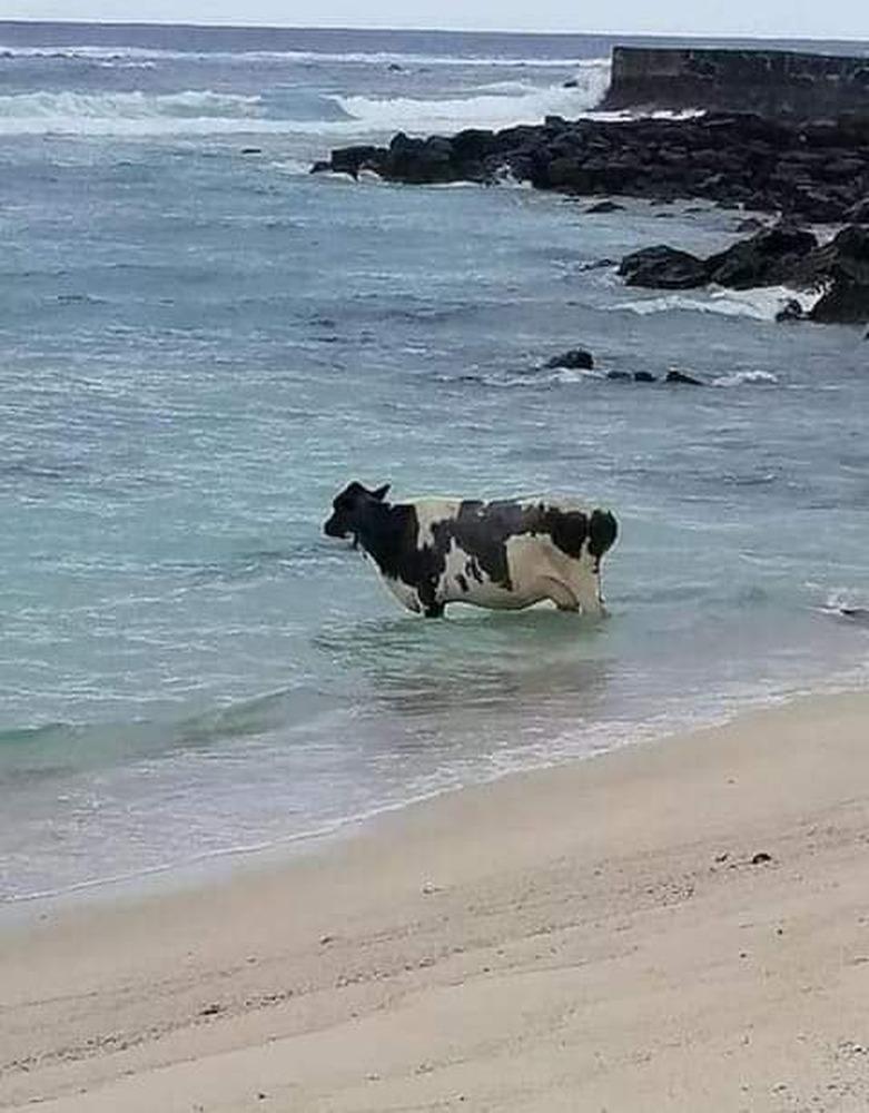 Report of Level 4 lockdown breach no bull!