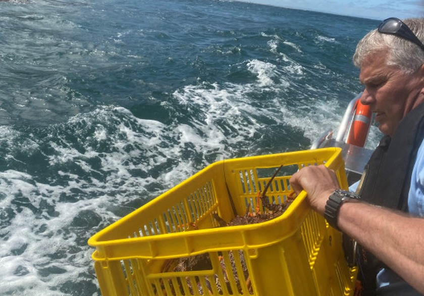 What does MPI do with all the seafood taken off people breaking the rules?