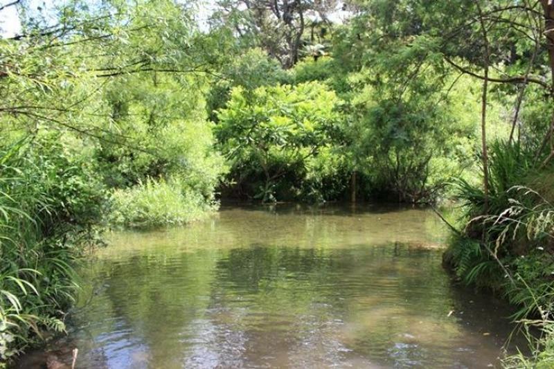 Bird poo likely cause of Uretara River E.coli levels