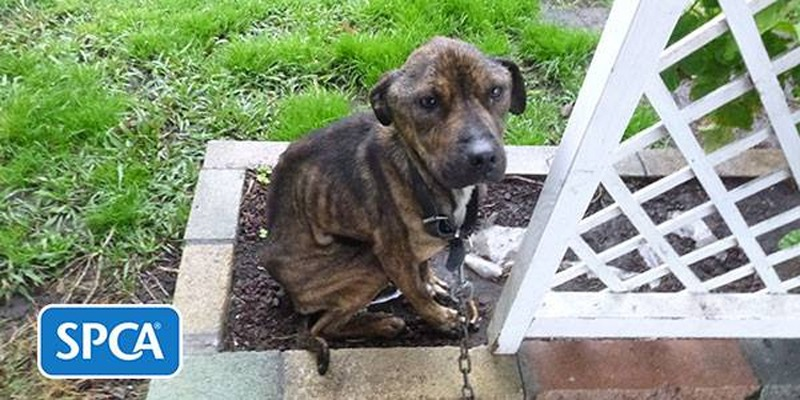 Man jailed for neglecting his dogs