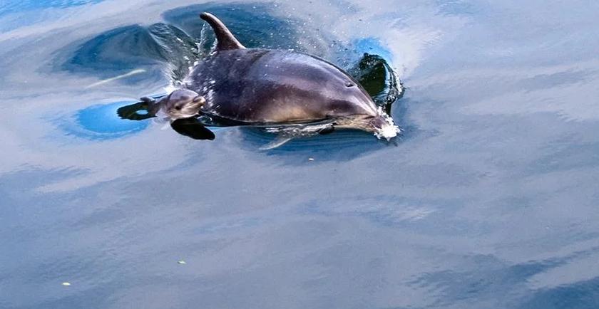DoC investigating jetski incident with dolphins