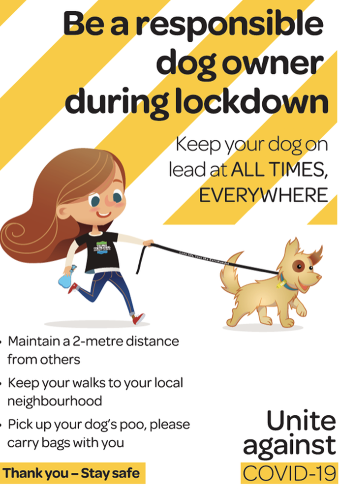 Is your dog bored in lock down?