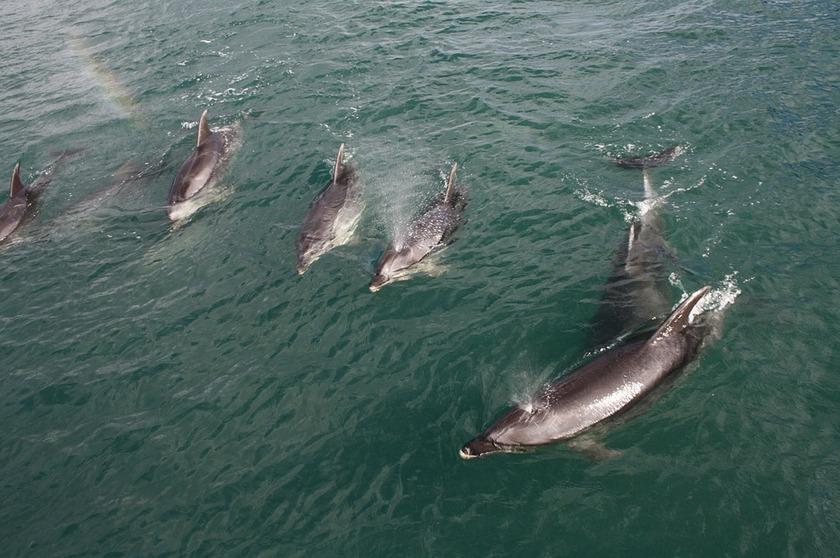 New protection for dolphins and support for changes to fishing methods