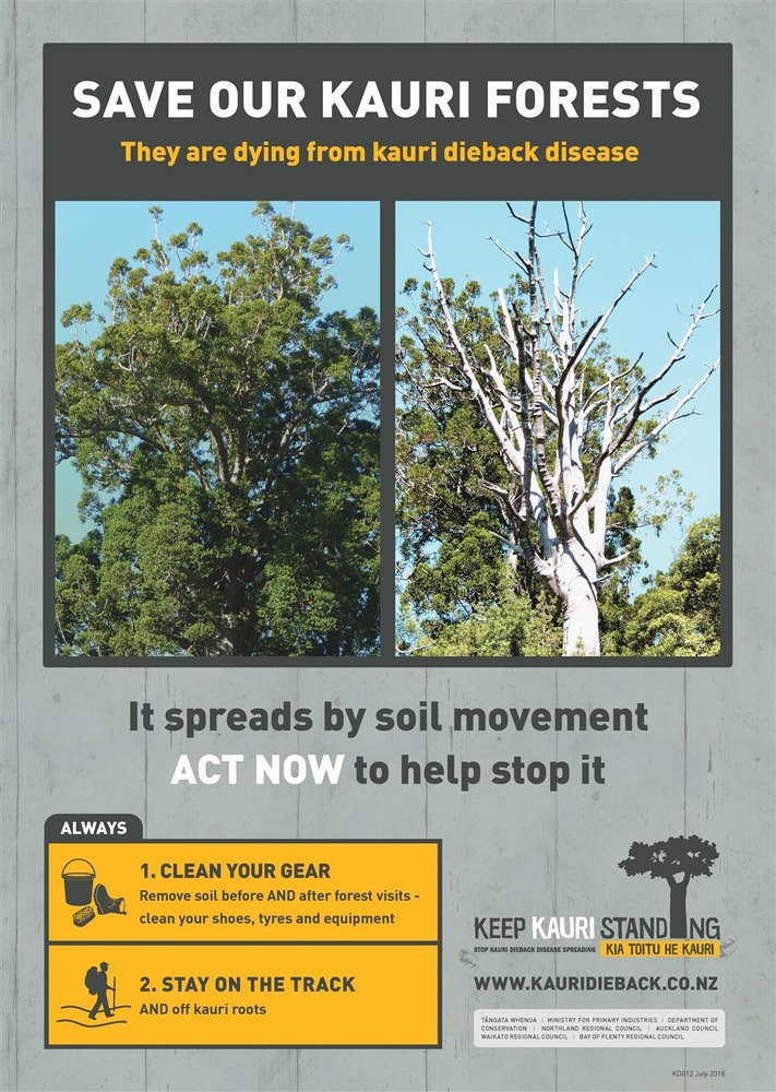 Spreading the Kauri Dieback message to avoid spreading Kauri Dieback