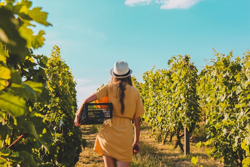 New Year Border Exception For Seasonal Workers In The Horticulture And Wine Industries And Incentives For Kiwi Workers
