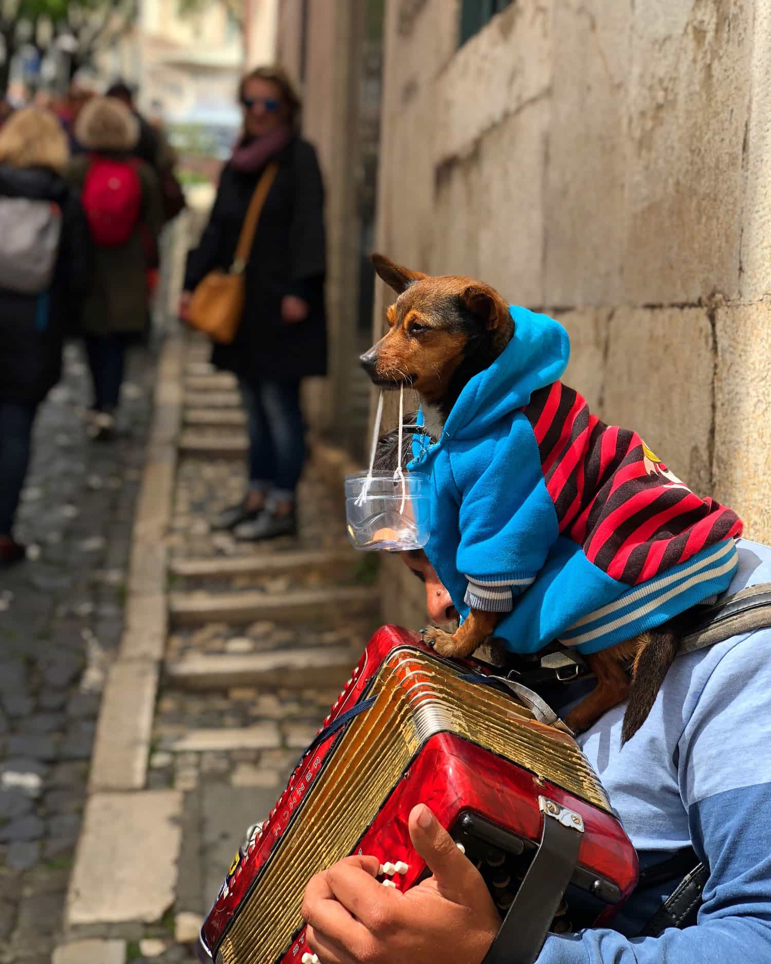 Dog by Ed Stennett