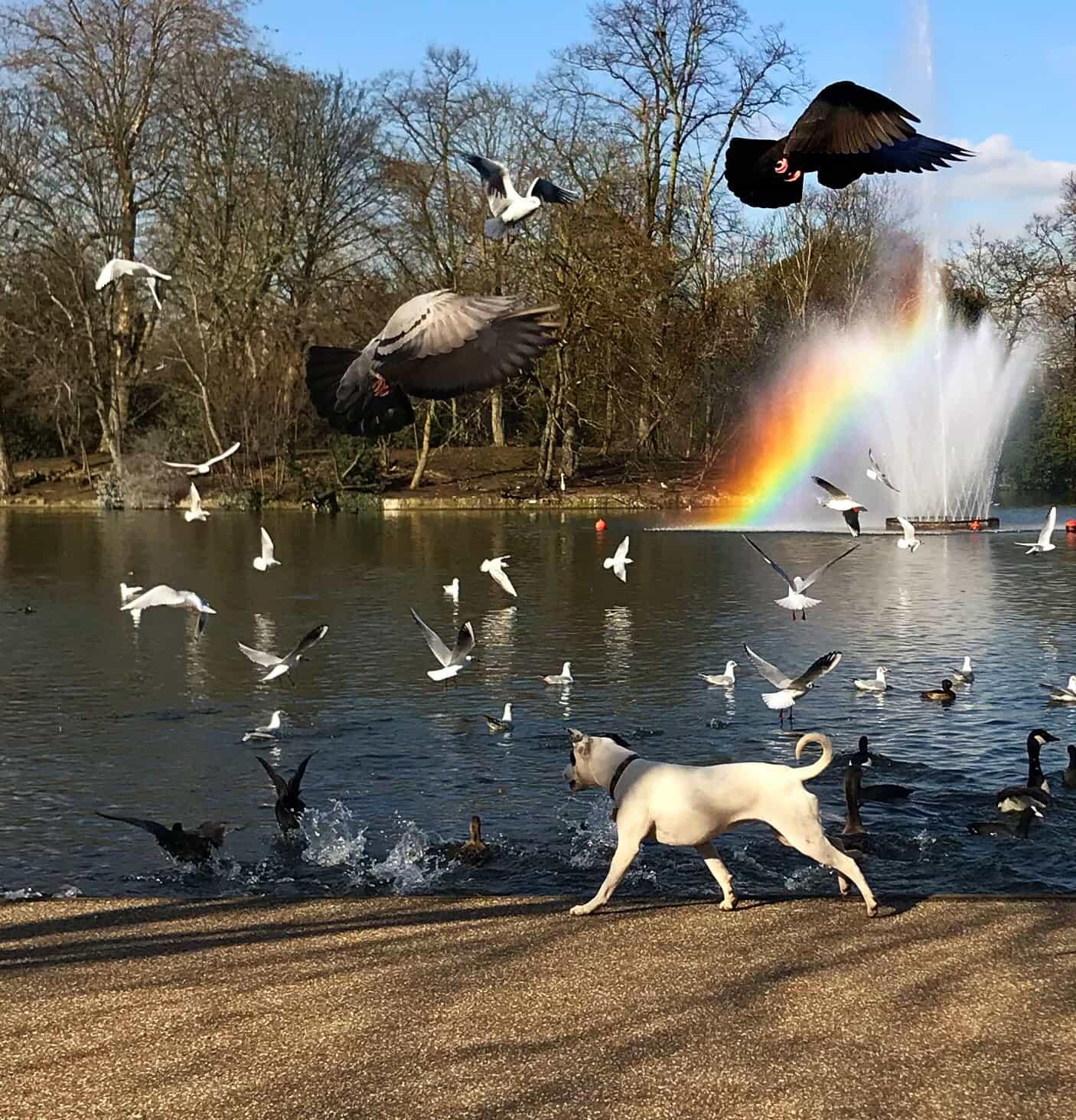 Victoria Park by James Falconer