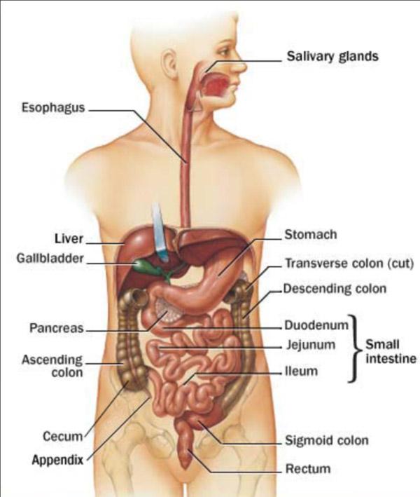 intestinal tract seniors