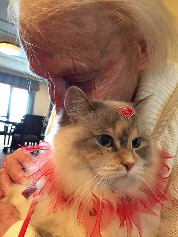 elderly with a cat, zootherapy