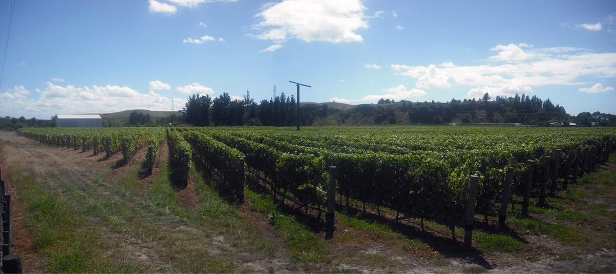 Wine Club - 24 October: Mills Reef Winery
