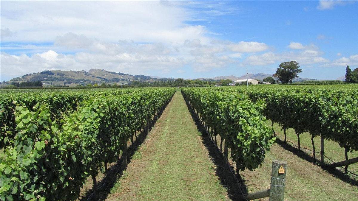 Wine Club - 27 March 2019: Askerne Estate Winery