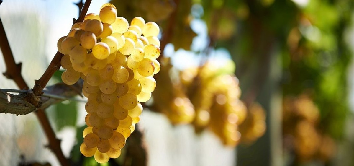 Wine Club: 24th February - Clearview Estate Winery, Hawke's Bay