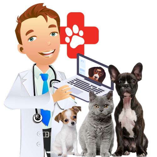 Online Veterinary Consultations with VetCheck Vets 24/7
